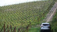 Lexus NX Hybrid: il suv ibrido alla prova del Vigneron - Immagine: 25