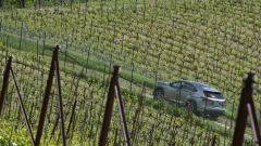 Lexus NX Hybrid: il suv ibrido alla prova del Vigneron - Immagine: 28