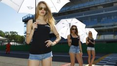 MINI Challenge 2017 - le grid girls