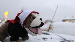 Mini va da Babbo Natale... a caccia di un record - Immagine: 1