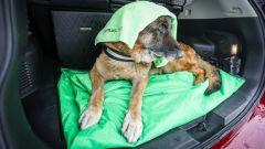 Nissan X-Trail Trainer: il contest dedicato all'allestimento per Fido - Immagine: 18