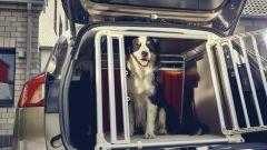Nuova Ford Focus wagon: a prova di amici a quattro zampe - Immagine: 5