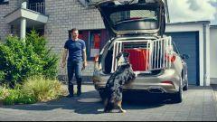 Nuova Ford Focus wagon: a prova di amici a quattro zampe - Immagine: 1