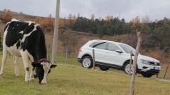 Nuova Volkswagen Tiguan 1.6 TDi... in buona compagnia