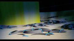 Pneumatici Fuori Uso: un tesoro sottomarino - Immagine: 14