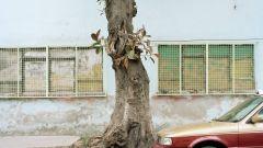 Rencontres: DS 23 e Nuova DS 5 ad Arles - Immagine: 140