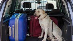 Come portare Fido in vacanza: 8 trucchi per gli animali a bordo - Immagine: 3