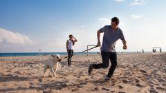 Come portare Fido in vacanza: 8 trucchi per gli animali a bordo - Immagine: 4