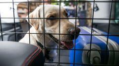 Come portare Fido in vacanza: 8 trucchi per gli animali a bordo - Immagine: 7