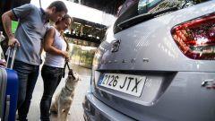 Come portare Fido in vacanza: 8 trucchi per gli animali a bordo - Immagine: 8
