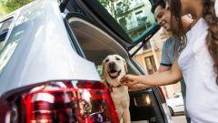 Come portare Fido in vacanza: 8 trucchi per gli animali a bordo - Immagine: 9