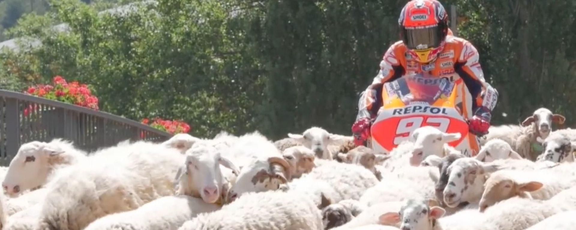 Spot Repsol, Marc Marquez in mezzo ad un gregge