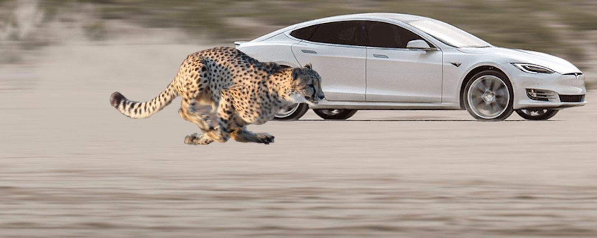 Tesla Model S Performance: col Cheetah Stance lo 0-100 è un attimo