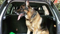 Vacanze in auto con il cane: cosa fare?