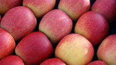 Val di Non: me la guido e... mela godo - Immagine: 7