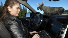 Volvo Animal Detection - Immagine: 15