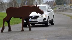 Volvo Animal Detection - Immagine: 5