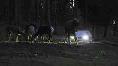 Volvo Animal Detection - Immagine: 13