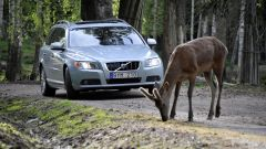 Volvo Animal Detection - Immagine: 8