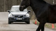 Volvo Animal Detection - Immagine: 6