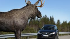 Volvo Animal Detection - Immagine: 4